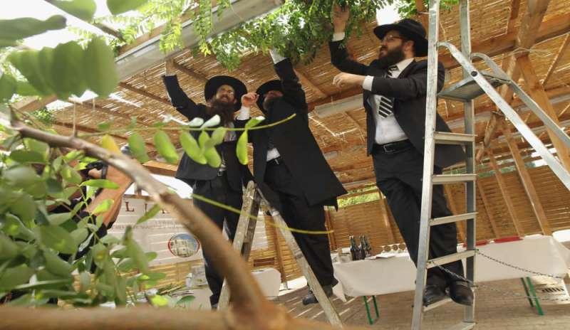 cedri-sukkot-ebrei